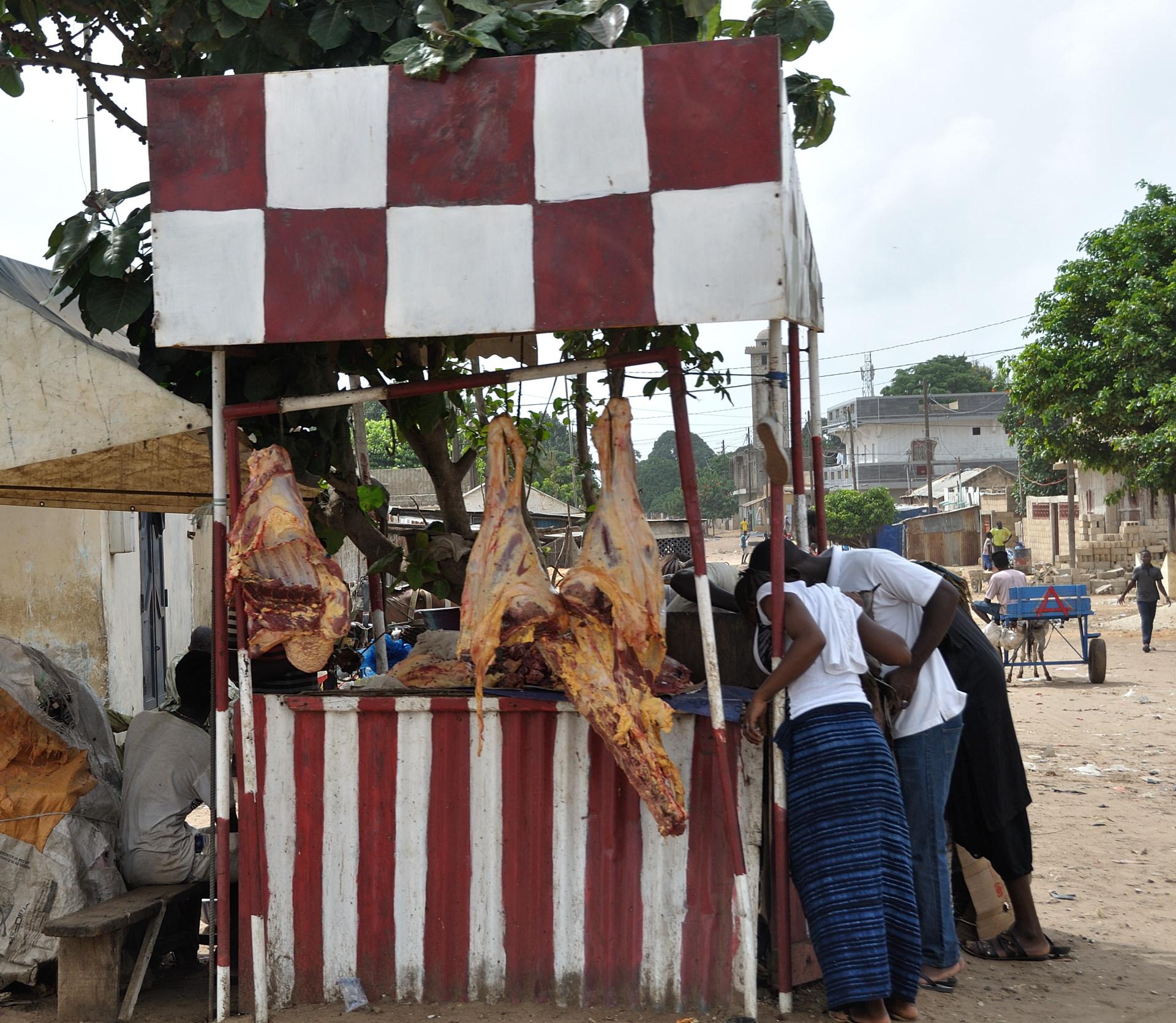 11-BlogSengebambia-007