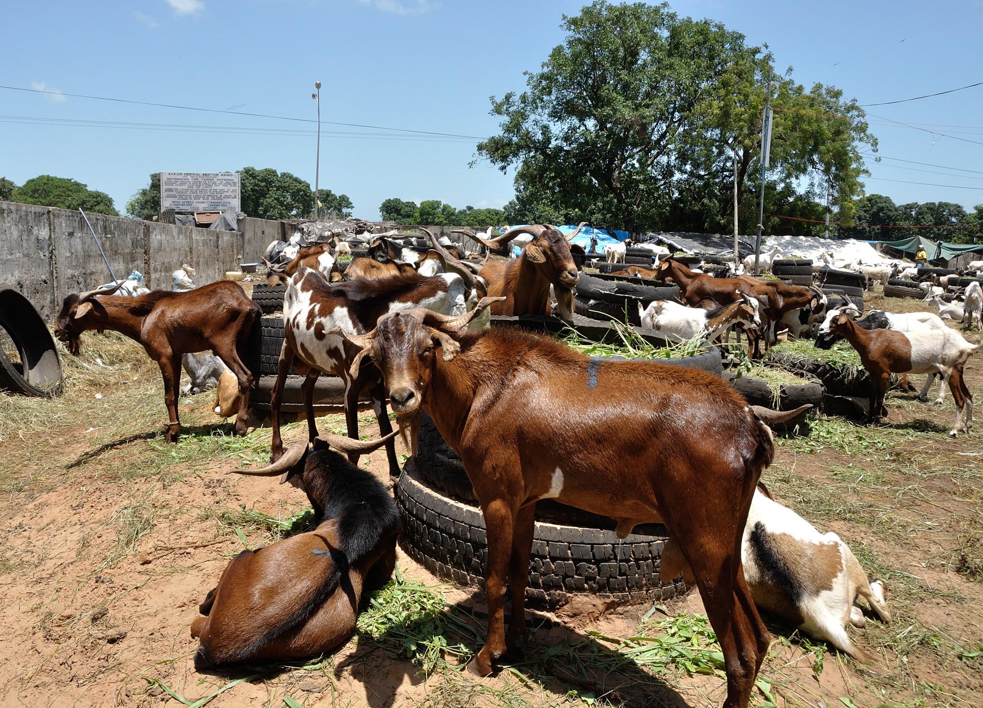 37-BlogSengebambia-033